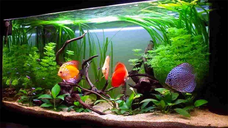 acquariologia massimo sorato